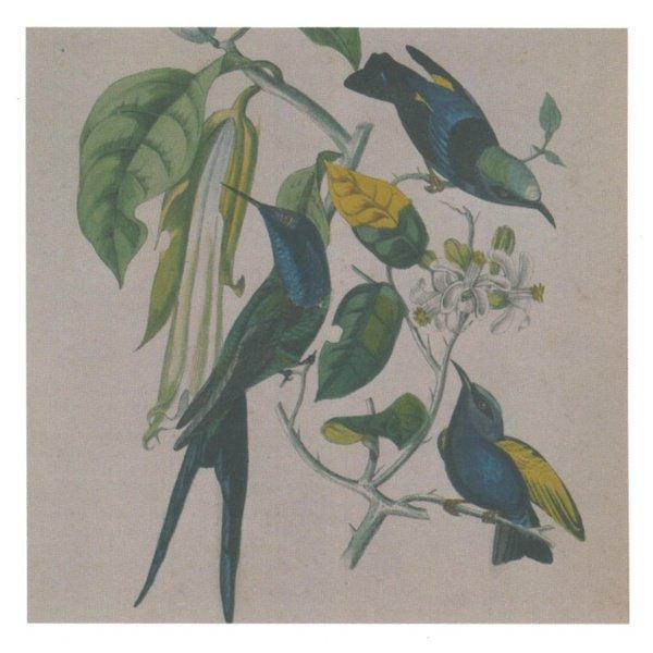 Sakura album cover
